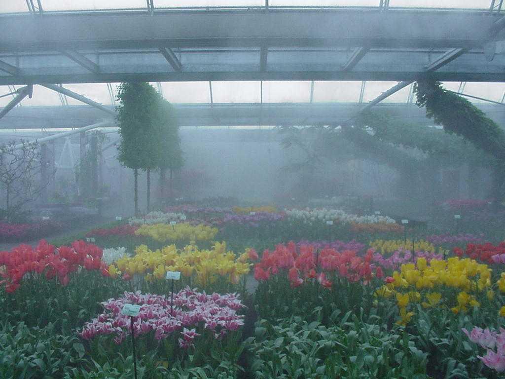 13 туман