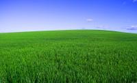 1 газон